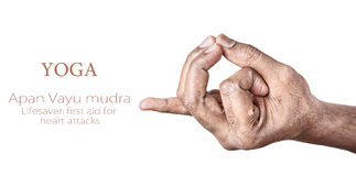Yoga Apan Vayu mudra. Hands in Apan Vayu mudra by Indian man isolated at white background. Gesture also called as lifesaver: first aid for heart attacks. Free Stock Image