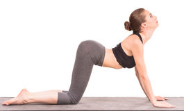 Yoga. Beautiful sporty woman doing yoga exercise in cat position and looking up Stock Images