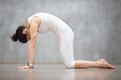 Yoga bella: Gatto, posa di Marjaryasana Immagini Stock