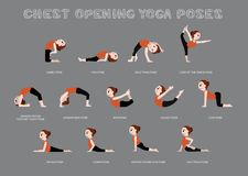 Yoga Chest Opening Poses Vector Illustration Stock Photography