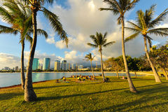 Yoga class amoung the palm trees in Hawaii Royalty Free Stock Photography