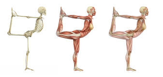 Yoga Dancer Pose - Anatomical Overlays. 3d render royalty free illustration