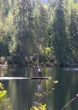 Yoga del lago Fotografie Stock