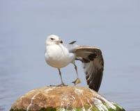 Yoga dell'uccello Fotografia Stock