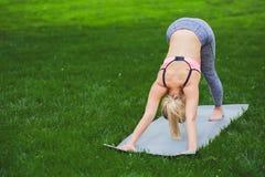 Yoga di addestramento della donna nella posa del cane Immagine Stock Libera da Diritti