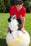 Yoga dog looks at trainer Stock Photos