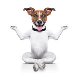 Yoga dog. Sitting relaxed with happy face Royalty Free Stock Photos
