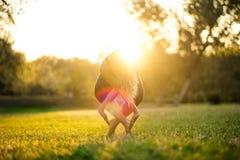 Yoga en parc, extérieur avec le coucher du soleil de lumière d'effet, femme de santé Femme avec le corps de sport Image libre de droits