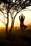 Yoga exercise. Outdoor near tree Royalty Free Stock Images