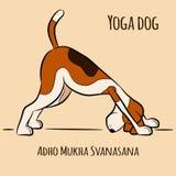 Yoga för tecknad filmhundshower poserar Adho Mukha Svanasana Fotografering för Bildbyråer