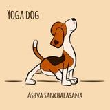 Yoga för tecknad filmhundshower poserar Ashva Sanchalasan Royaltyfri Bild