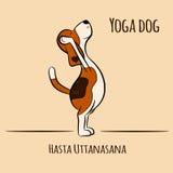 Yoga för tecknad filmhundshower poserar den Hasta uttanasanaen Arkivfoton
