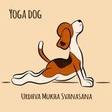 Yoga för tecknad filmhundshower poserar Urdhva Mukha Svanasana Royaltyfri Foto