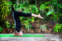 Yoga in the garden. Yoga shirshasana headstand pose by young woman in black costume in the garden with banana trees and tropical plants in the pots Stock Photos