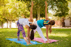 Yoga girls at a park Stock Images