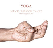 Yoga Jalodar Nashak mudra. Hand in Jalodar Nashak mudra by Indian man isolated at white background. Free space for your text Royalty Free Stock Images