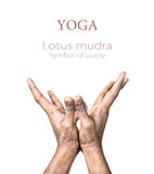 Yoga lotus mudra Stock Image