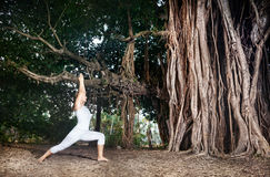 Yoga near banyan tree. Woman in white costume doing Yoga warrior pose near big banyan tree in Goa, India stock image