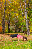 Yoga Padma mayurasana pose Royalty Free Stock Images