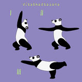Yoga panda bear virabhadrasana pose Royalty Free Stock Images