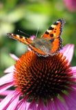 Yoga para la mariposa Imagen de archivo