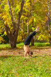 Yoga pinch mayurasana pose Stock Images