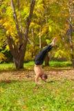 Yoga pinch mayurasana pose. Man exercises in the autumn forest yoga pinch mayurasana pose Stock Images
