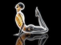 Yoga poserar - konungen Cobra Royaltyfria Bilder
