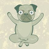 Yoga pug Stock Images