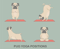 Yoga  pugs set Stock Photo