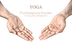 Yoga Pushpaputa mudra. Hands in Pushpaputa mudra by Indian man isolated at white background. Free space for your text Stock Photos