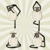 Yoga sheep standing in different poses. Royalty Free Stock Photo
