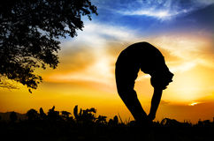 Yoga silhouette tiriang mukhottanasana pose. Man silhouette doing tiriang mukhottanasana backward bending pose with tree nearby outdoors at sunset background royalty free stock photo