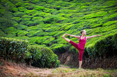 Yoga in tea plantations royalty free stock image