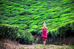 Yoga in tea plantations Stock Photos