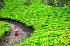 Yoga in tea plantations Royalty Free Stock Photography