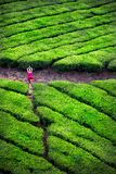 Yoga in tea plantations Royalty Free Stock Photo
