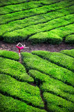 Yoga in tea plantations Stock Photo