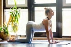 Yoga thuis: De koe stelt Stock Foto
