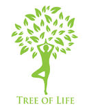Yoga and the tree of life. Tree with green leaves and a silhouette of a man doing yoga Stock Photography