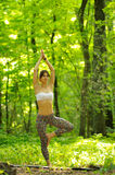 Yoga tree pose by woman on green grass in the park around pine t Stock Image