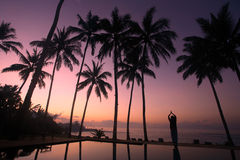 Yoga under the coconut trees. Woman meditating at sunrise under the coconut trees Royalty Free Stock Photo