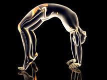 Yoga - Urdhva Dhanurasana Stock Photography