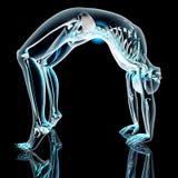 Yoga - Urdhva Dhanurasana Royalty Free Stock Image