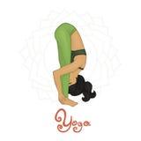 Yoga. Women's Yoga Uttanasana (Hatha Yoga Stock Photography