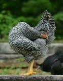 Yogafågelunge Arkivfoto