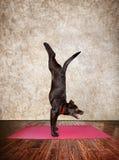 Yogahond Stock Fotografie