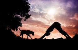 Yogahunden poserar royaltyfria foton