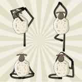Yogaschafe, die in den verschiedenen Haltungen stehen Lizenzfreies Stockfoto