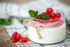 Yogur dulce con el atasco y la pasa roja Imágenes de archivo libres de regalías